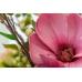 Arrangement rose pâle et vert