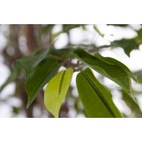 Arbre artificiel, ficus 10', vert et lime