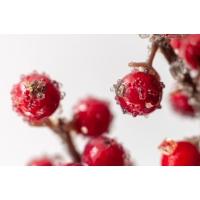 Tige de baies rouges glacées, 20''