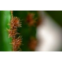 Cactus en pot de céramique, 17,5''