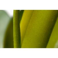 Plante grasse verte, 12''