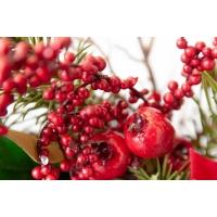 Couronne de pin avec poinsettias et baies rouges, 24''