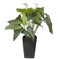 47'' calla lily arrangement in black plastic planter