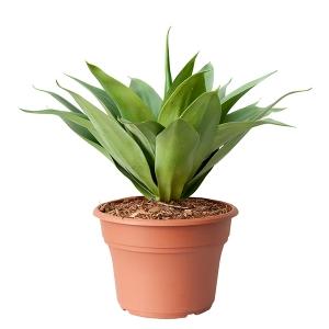 Plante artificielle, agave 19''