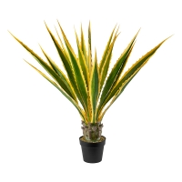 Potted Agave Americana, 45''