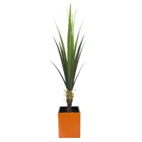 Agave dans pot orange, int./ext.