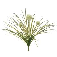 Alliums blancs, 18''