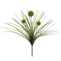 Yellow Allium, 18''