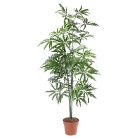 Artificial Aralia Plant, 60''