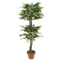 5' Artificial tree, green aralia ming