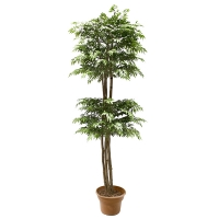 7' Artificial tree, green aralia ming