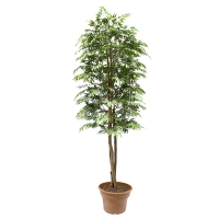 Artificial Aralia Ming, 6'