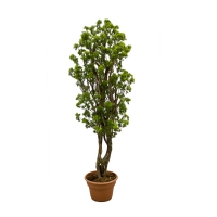 4' Artificial tree, aralia parsley