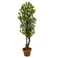 6' Artificial tree, aralia parsley