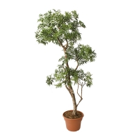 Artificial Aralia Tree, 5'