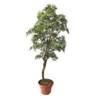 Artificial Aralia Tree, 6'