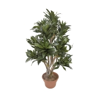 Arbre artificiel, Dracaena fragrans 3'