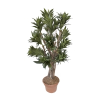 Arbre artificiel, Dracaena fragrans 4'