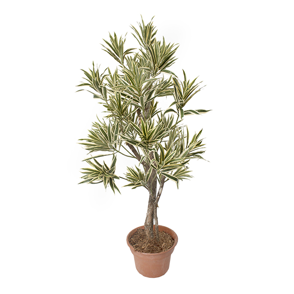 Arbre artificiel dracaena jaune 4 39 d cors v ronneau for Arbre artificiel
