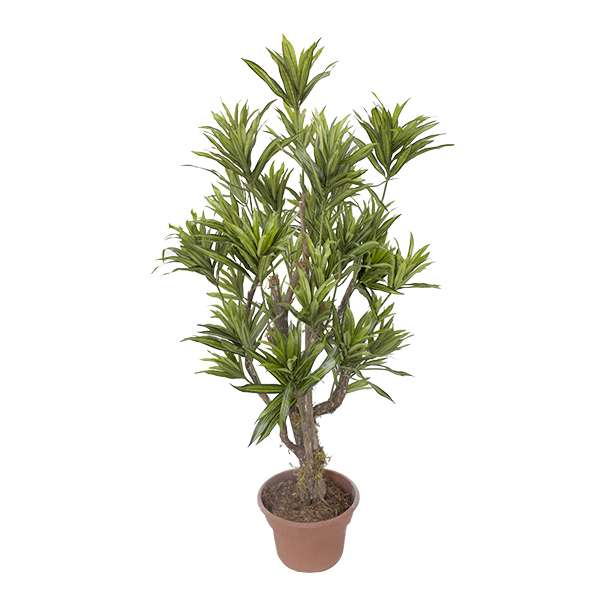 Arbre artificiel dracaena vert lime 4 39 d cors v ronneau for Arbre artificiel