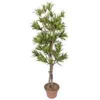 6' Artificial lime green dracaena tree