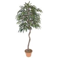 7' Artificial Ficus Ali