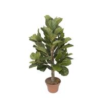 4' Artificial Ficus lyrata