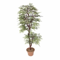 Arbre artificiel, Maidenhair 6'