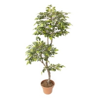 Arbre artificiel, mini ficus vert et lime  6'