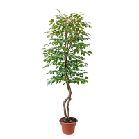 Arbre artificiel, rose leaf 7'