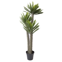 Arbre artificiel, pachypodium 5'