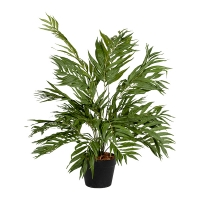 Butterfly palm bush 36''