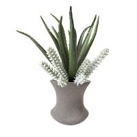 Aloès et plantes grasses en vase