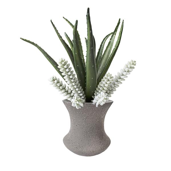 Alo s et plantes grasses en vase d cors v ronneau - Plantes grasses en pot ...