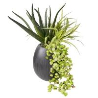 Arrangement de plantes grasses en pot
