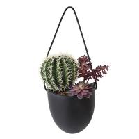 Arangement de cactus dans pot suspendu