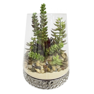 Arrangement de plantes grasses 12''