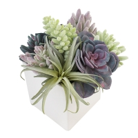 Arrangement de plantes grasses, pot blanc