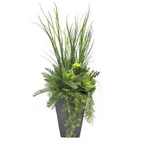 Arrangement de verdure et plantes grasses, pot noir
