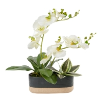 Minimalist Arrangement of Orchids