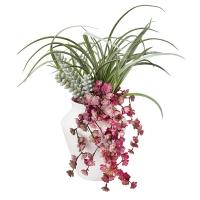 Arrangement coloré de plantes grasses