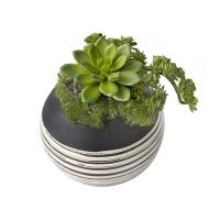Petites plantes grasses en pot