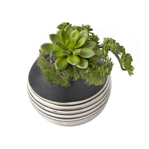 petites plantes grasses en pot d cors v ronneau. Black Bedroom Furniture Sets. Home Design Ideas