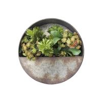 Plantes grasses dans un pot mural