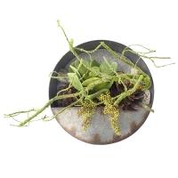 Succulent arrangement in wall planter 16 x 16 x 5,5''