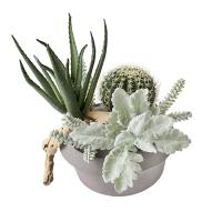 Arrangement de cactus, plantes grasses et bois