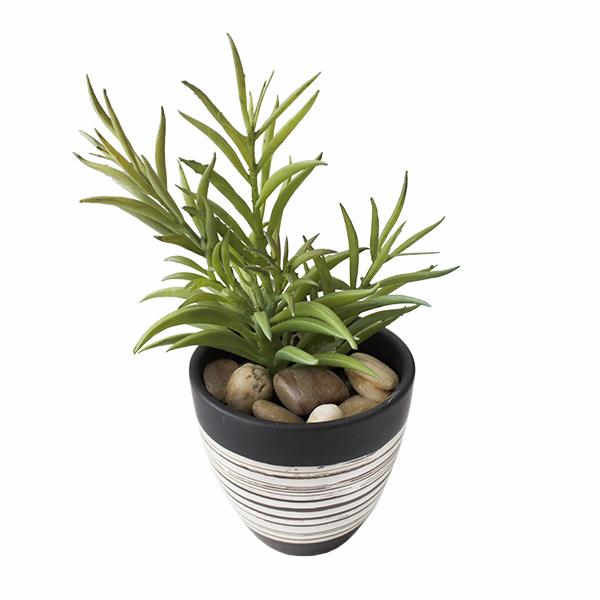 plante grasse en pot d cors v ronneau. Black Bedroom Furniture Sets. Home Design Ideas