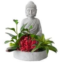Arrangement, pot bouddha