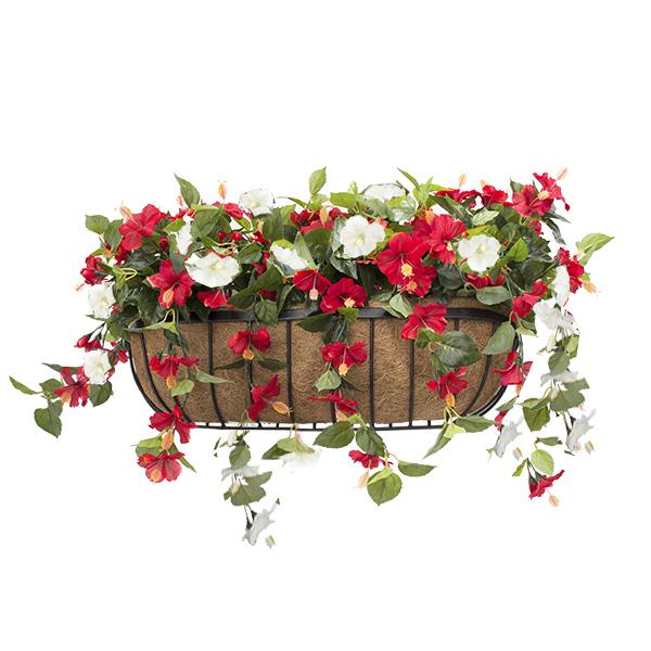 Balconni re hibiscus rouge blanc 28 39 39 d cors v ronneau for Hibiscus exterieur rouge