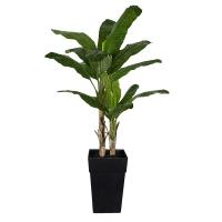 Bananier extérieur en pot, 84''